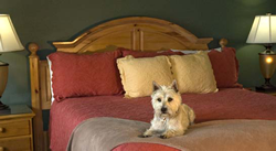 LittleRiverInn_Hairy_Bed